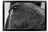 Eye of the Horse, Framed Print