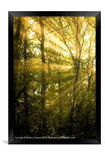 Sunrays Through the Trees, Framed Print