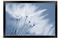 Dusty Blue Dandelion Clock and Water Droplets, Framed Print