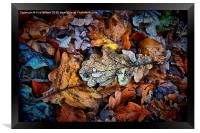 Autumn Drop, Framed Print