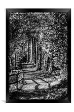 A walk in the woods B&W, Framed Print