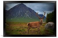 Monarch of the Glen at the Buachaille , Framed Print