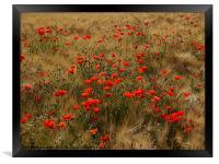 red poppy field, Framed Print