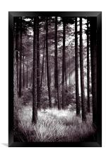 dark forest, Framed Print