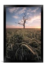 The Lone Tree, Framed Print