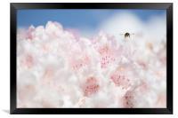 Busy bee , Framed Print