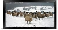 Ewe it's cold out here, Framed Print