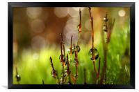 Moss Sparkles, Framed Print