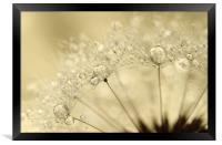 Dandelion Drops, Framed Print