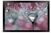 Rasberry Sparkles, Framed Print