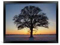 Oak Tree, Framed Print