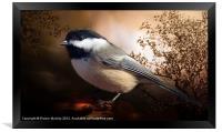 Black Capped Chickadee, Framed Print
