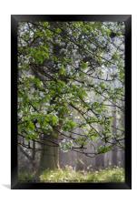 Wild Cherry Blossom, Framed Print