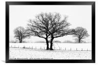 Three Winter Oaks, Framed Print