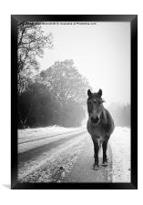 The Frozen Stare, Framed Print