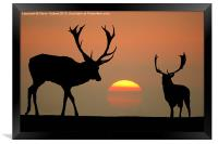 Sunset Stags, Framed Print