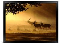 Golden Glow, Framed Print