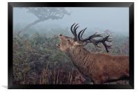 Red Deer Stag , Framed Print