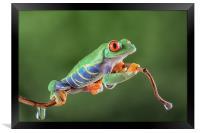 Red Eye Tree frog, Framed Print
