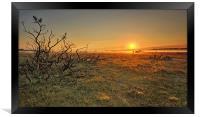 Golden Sunrise New Forest, Framed Print