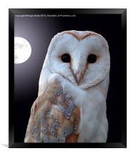 Barn Owl by Full Moon, Framed Print