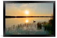 Swan at Sunset, Framed Print