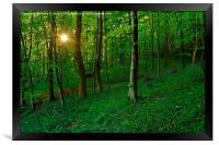 Bluebell Woods at Sunset, Framed Print