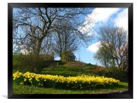 Lots of daffodils in a park, Framed Print