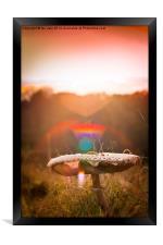 magic mushroom, Framed Print