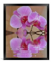 pretty orchid, Framed Print