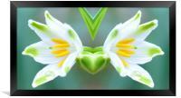 mirrored flower, Framed Print