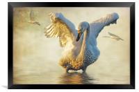Swans at Sunset, Framed Print