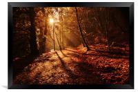 reelig forest walk, Framed Print