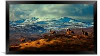 Stags at Strathglass, Framed Print