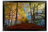 Reelig Forest, Framed Print