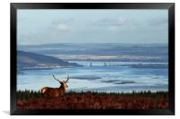 Stag Overlooking the Beauly Firth and Inverness, Framed Print