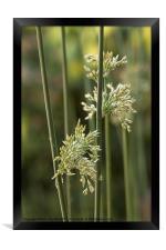 Simply Grass, Framed Print