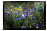 Wild Flowers in France, Framed Print