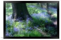 Bluebells, Framed Print