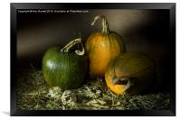 Three Pumpkins and Dried Daisies, Framed Print