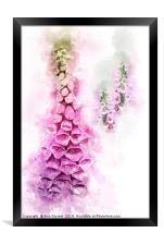 Digitalis Splashes, Framed Print