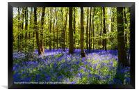 CARPET OF BLUEBELLS, Framed Print