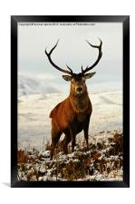 Monarch, Framed Print