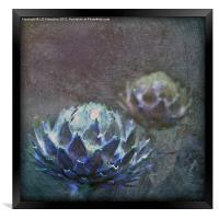 Globe Artichoke, Framed Print