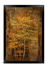 Golden Birch, Framed Print