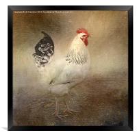 King of the Coop, Framed Print