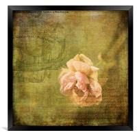 Yesterday's Rose, Framed Print