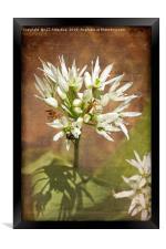 Wild Garlic, Framed Print