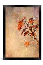 Maple Leaves, Framed Print