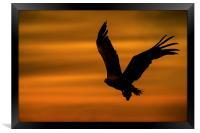 Eagle Silhouette, Framed Print